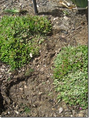 Smashed ice plants